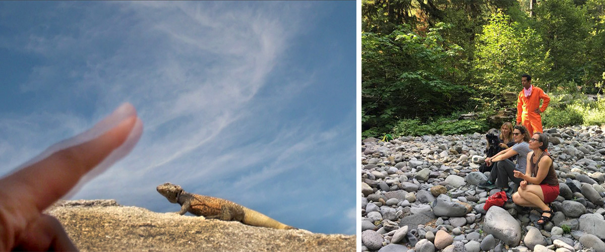 a photo of a hand and a western fence lizard, a photo of a group sitting on rocks in nature