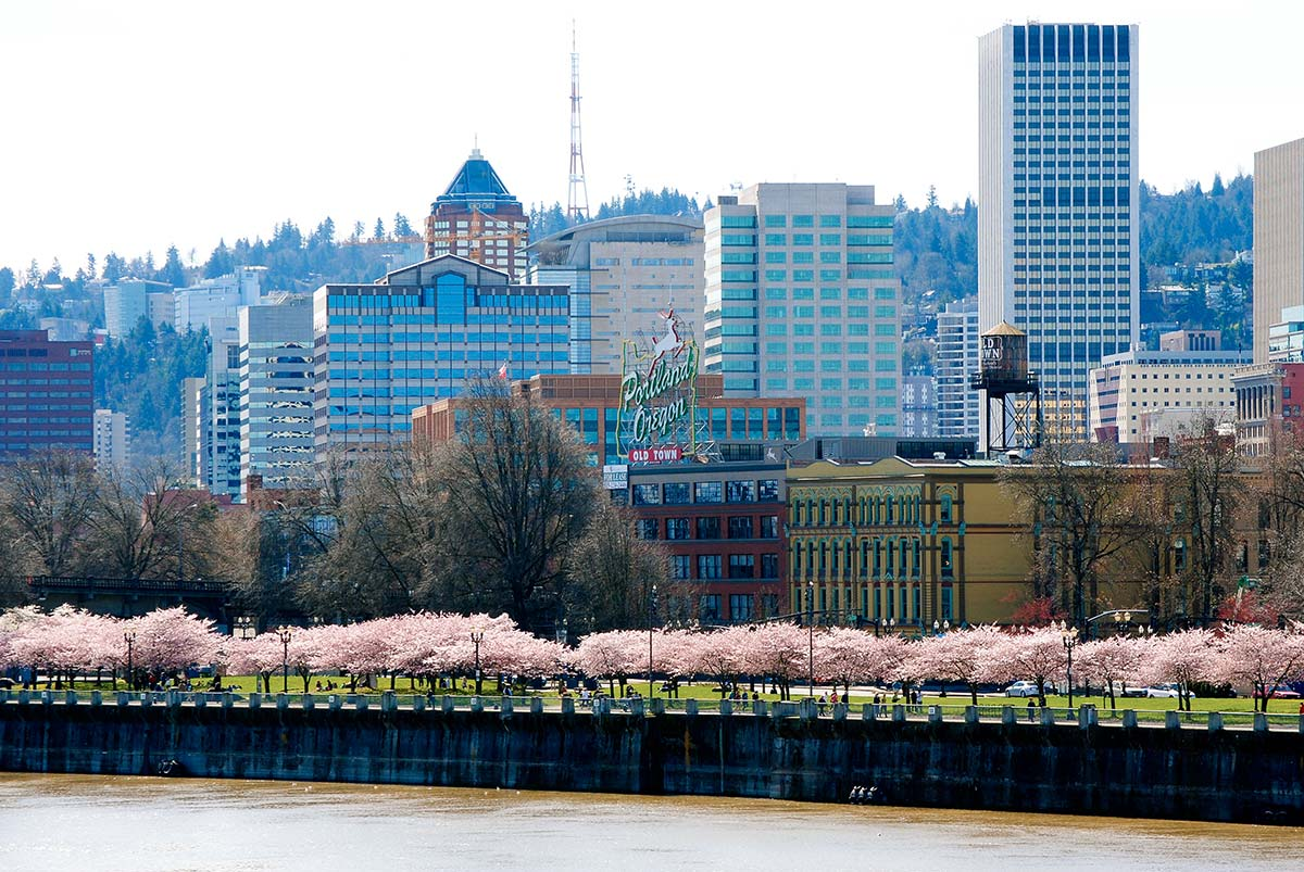 Portland, cherry trees in bloom, Willamette River